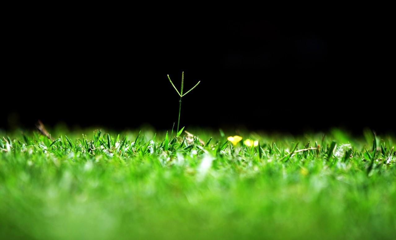 Pielęgnacja trawnika – podstawy