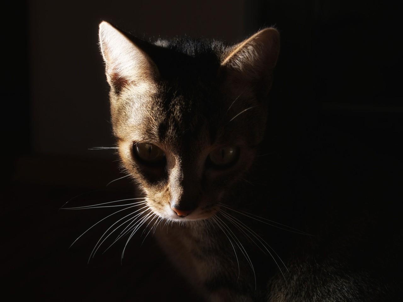 Wychowanie kota domowego
